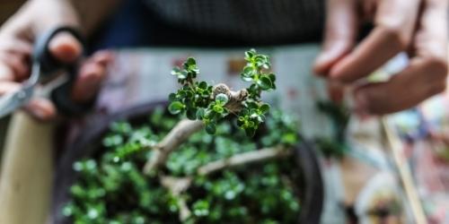 articulos foro filosofia de oriente para occidentales El bonsái, arte y naturaleza – Filosofía para la vida